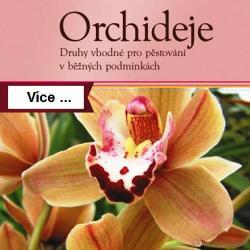 Orchideje druhy vhodné pro pěstování v domácích podmínkách